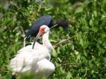 Sanibel Island Wildlife