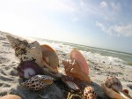 Sanibel Island Beach Shelling