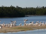Sanibel Island Wildlife