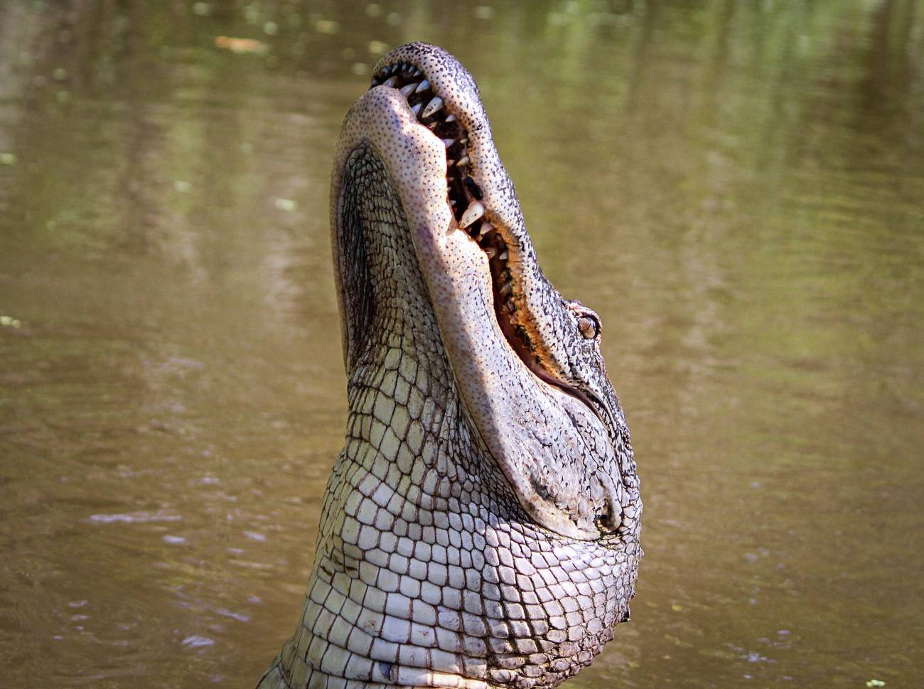 everglades-wildlife-adventure