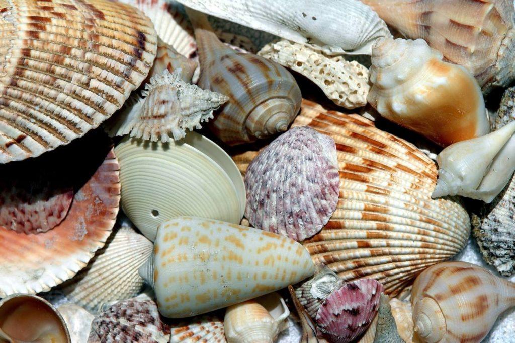 Gopher Rentals - Sanibel & Captiva Island Vacation Rentals