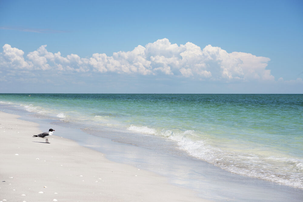Beautiful Sanibel island beach