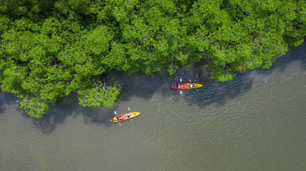 Aerial of kayakers on the Great Calusa Blueway