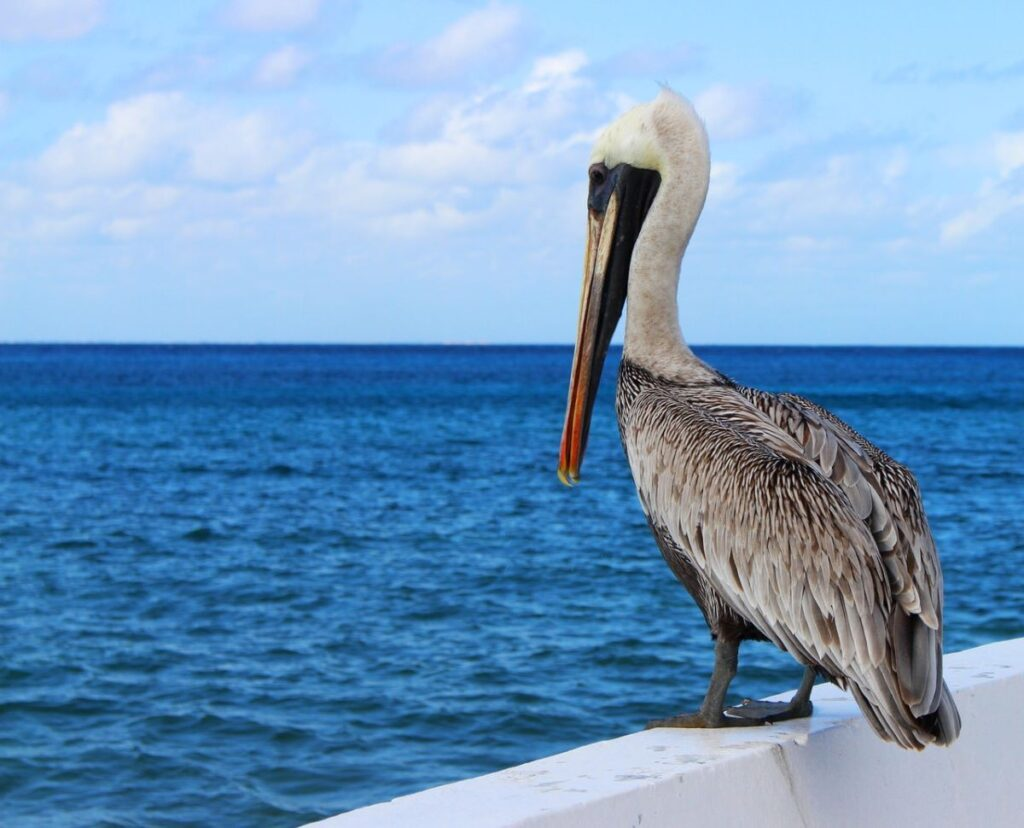 pelican sitting on boat